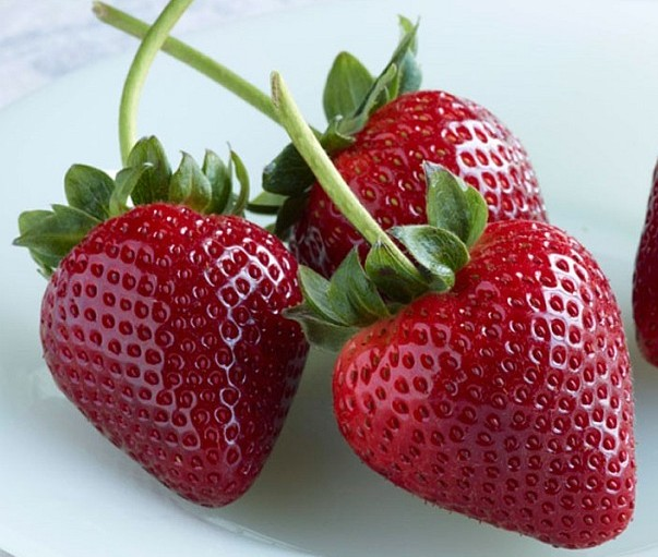 Successfully Growing Strawberries In North Texas Suburban
